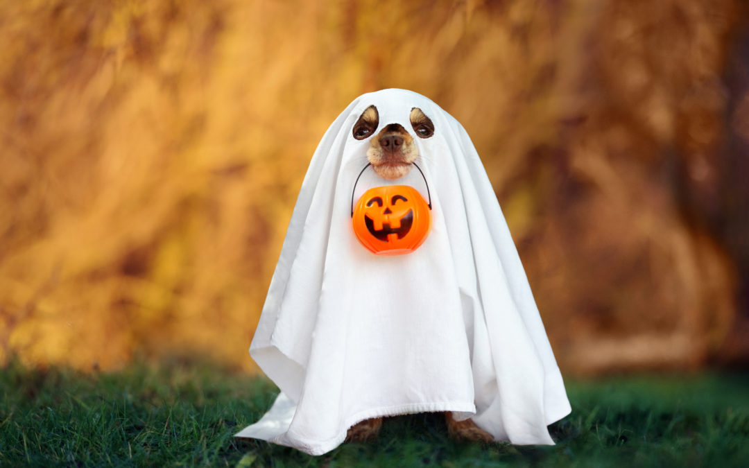 TRICK OR TREAT: HALLOWEEN CAMPAIGNS THAT ARE FRIGHTFULLY GOOD