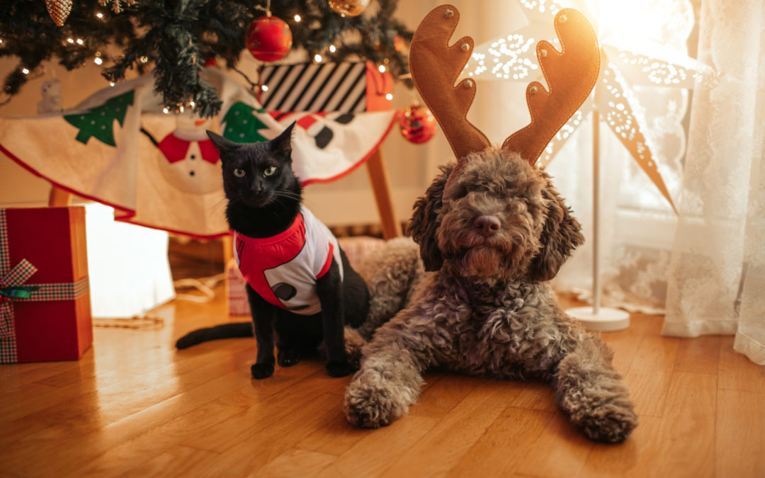 Santa Claws – The Growing Phenomenon of Treating Your Pets at Christmas